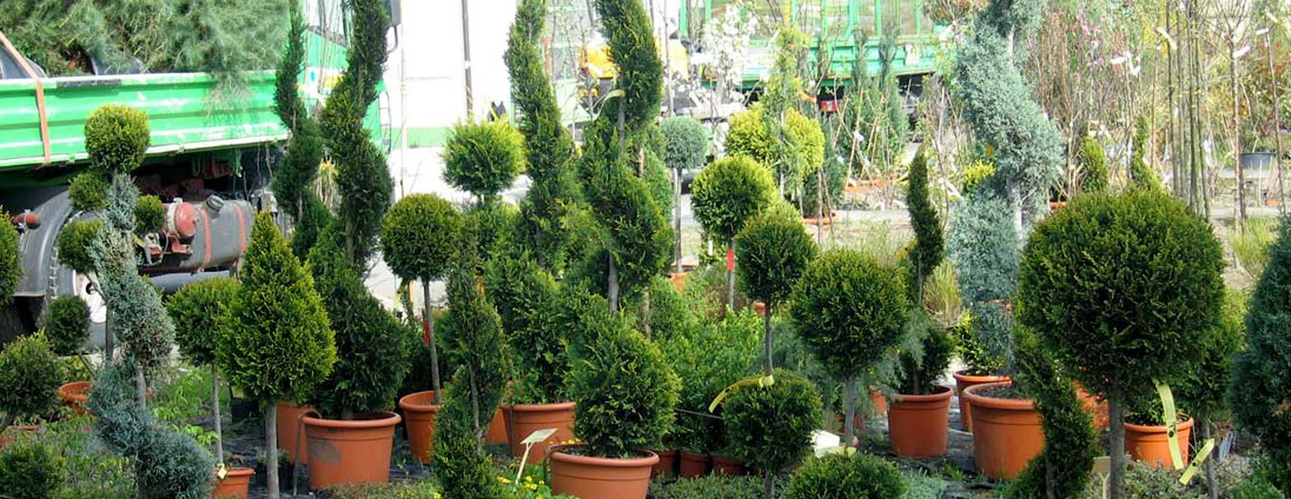 slider-pflanzenverkauf